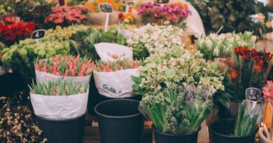 florarie-online (2)